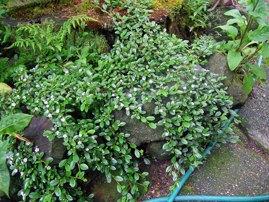 Ground covers that work for you